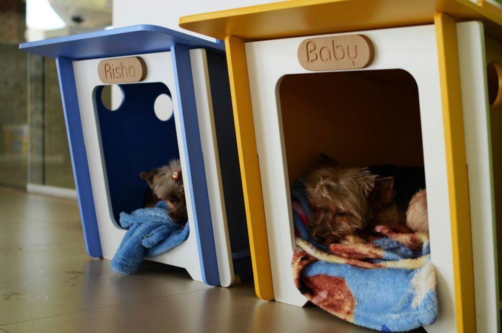 minimall - casinha de cachorro - customização de produto